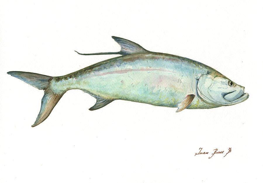 tarpon fishf painting by juan bosco