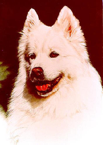 Dog Portrait Painting - Tasha by Judith Angell Meyer
