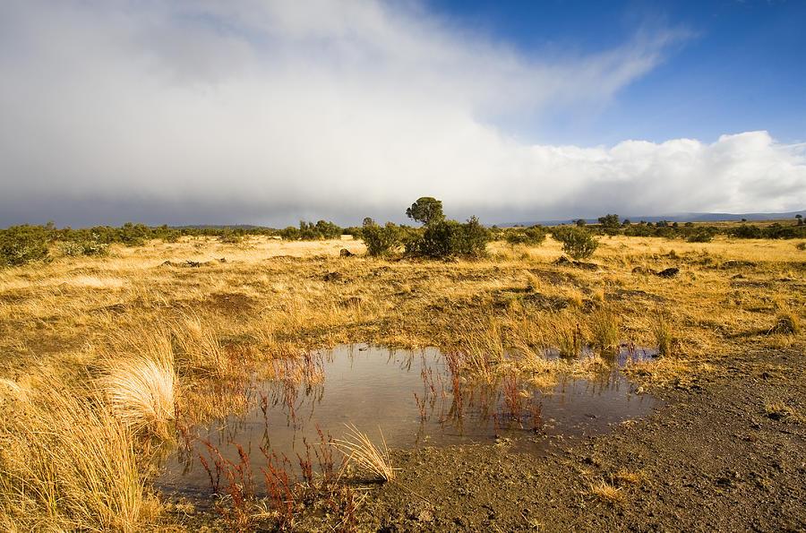 Tasmania Photograph - Tasmanian Storm  by Mike  Dawson