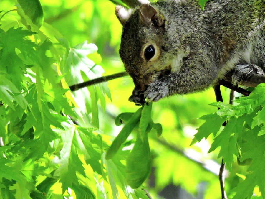 Trees Photograph - Tasty by Nancy Wagener
