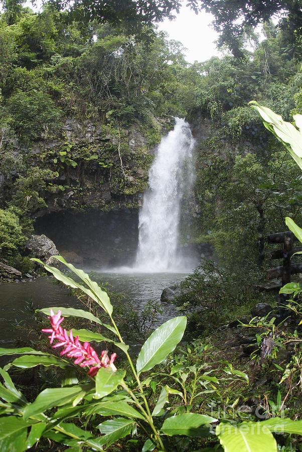 Beautiful Photograph - Taveuni, Tavoro Waterfall by Himani - Printscapes
