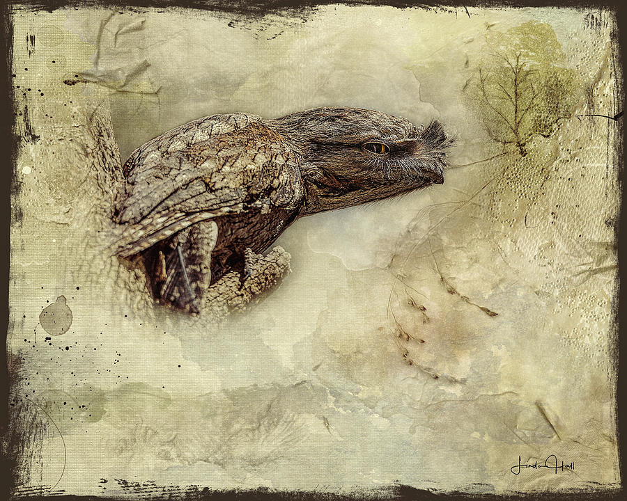 Tawny Frogmouth Digital Art - Tawny Frogmouth by Linda Lee Hall