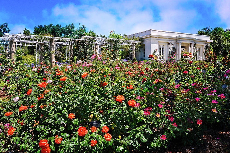 Tea House In The Rose Garden Photograph by Lynn Bauer