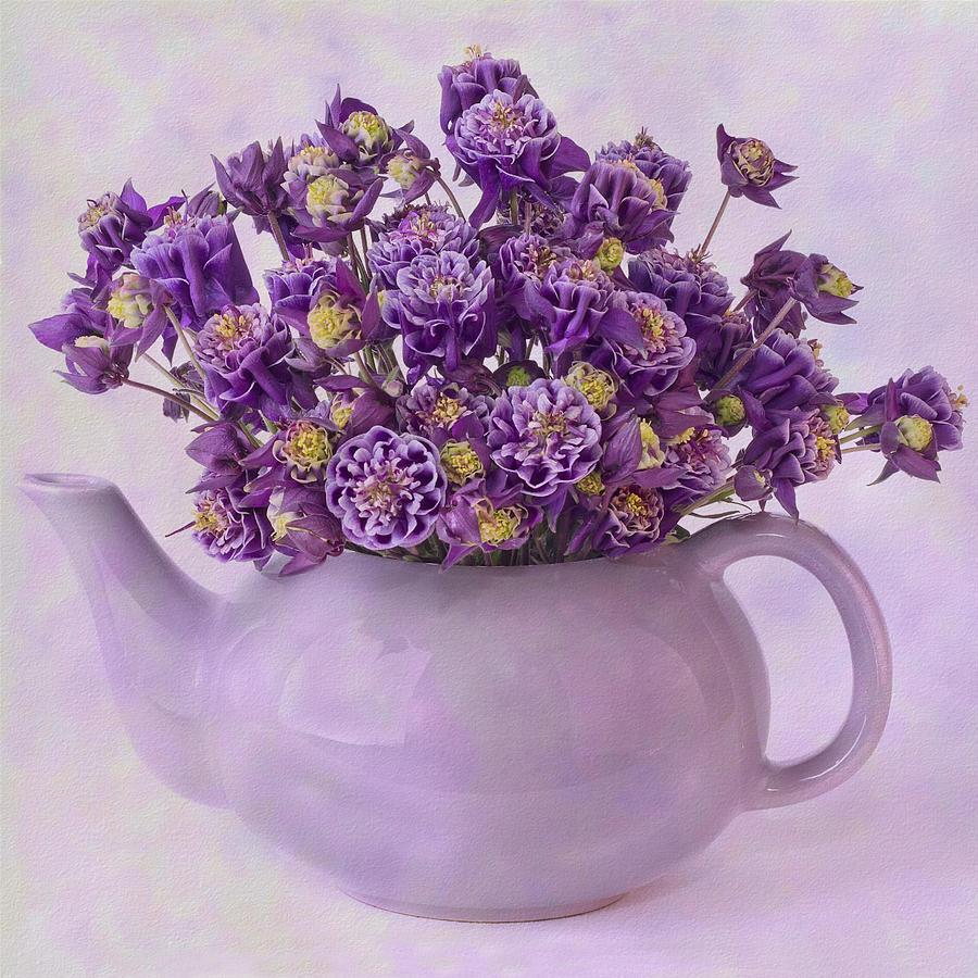 Tea pot of purple columbine flowers photograph by sandra foster columbine photograph tea pot of purple columbine flowers by sandra foster izmirmasajfo Gallery