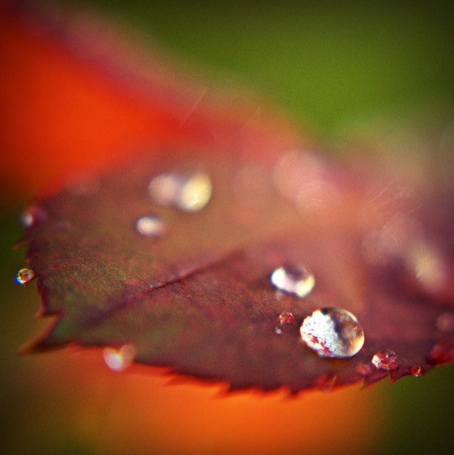 Leaf Photograph - Tears... by Svetlana Peric
