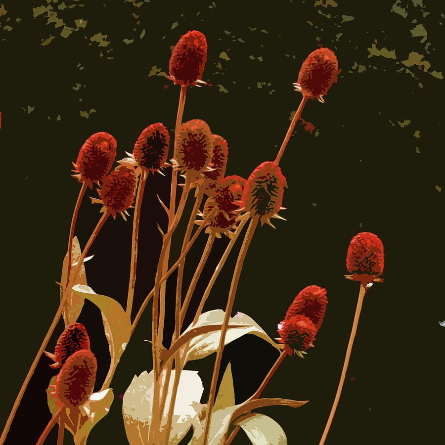 Teazels Photograph - Teazels In A Secret Garden  by James Hill