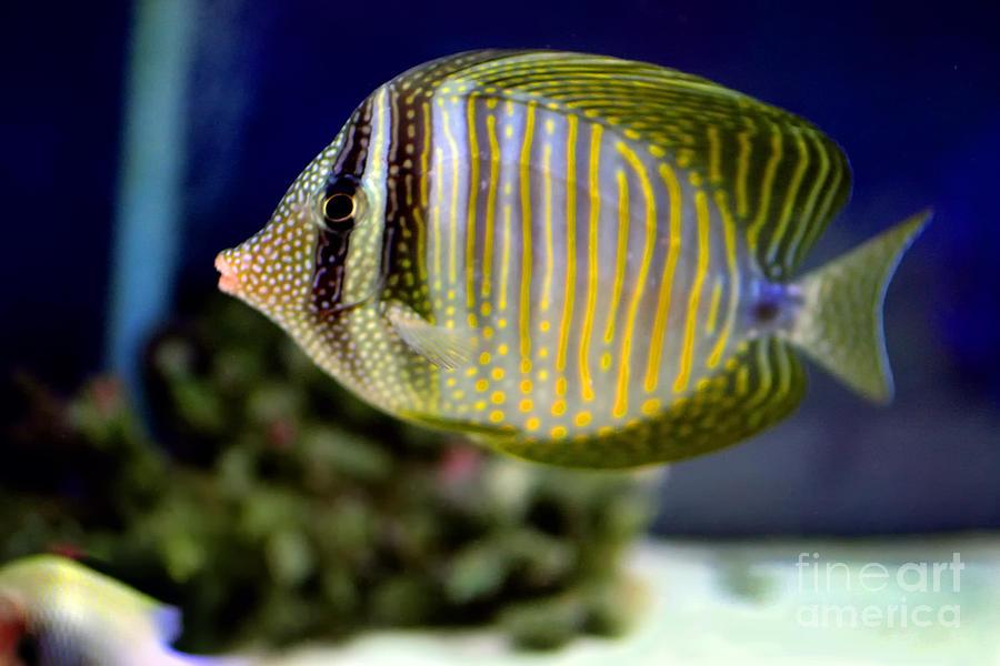 Fish Photograph - Technicolor Fish by Madeline Ellis