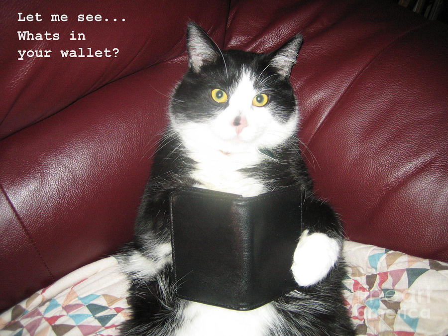 Cats Photograph - Teddy The Ninja Cat Wants To Know Whats In Your Wallet  by Reb Frost