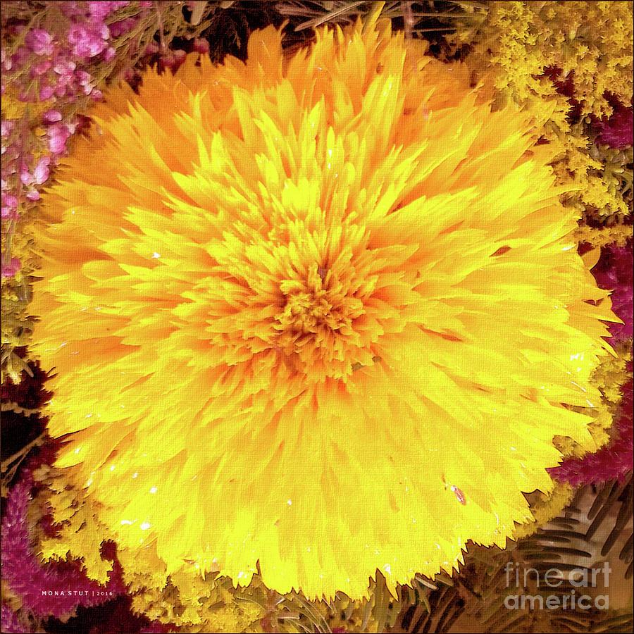 Yellow Teddybear Sunflower Photograph