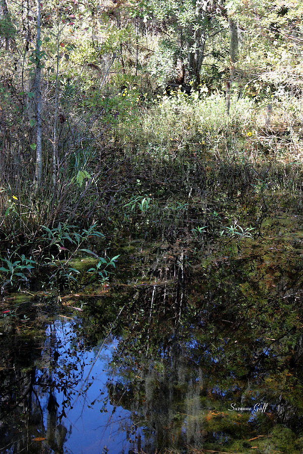 Swamp Photograph - Teeming With Life by Suzanne Gaff