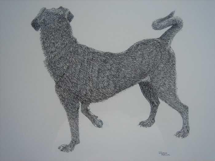 Mixed Breed Dog Drawing - Teetee by Joanie Arvin
