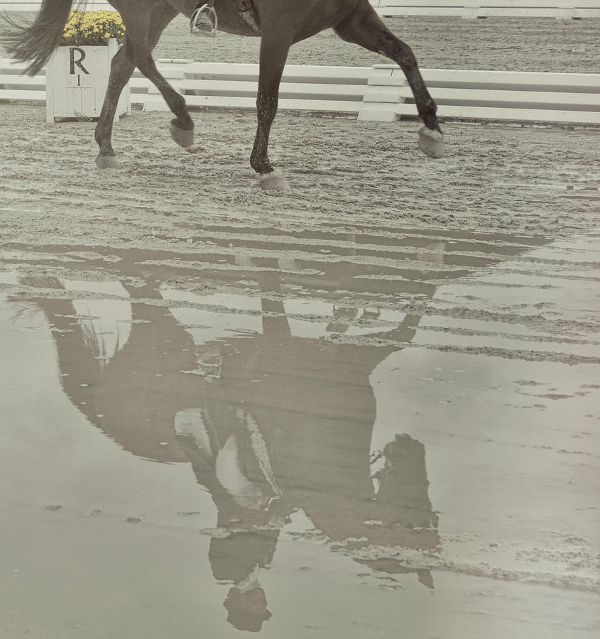 Horse Photograph - Tempo Reflected by JAMART Photography