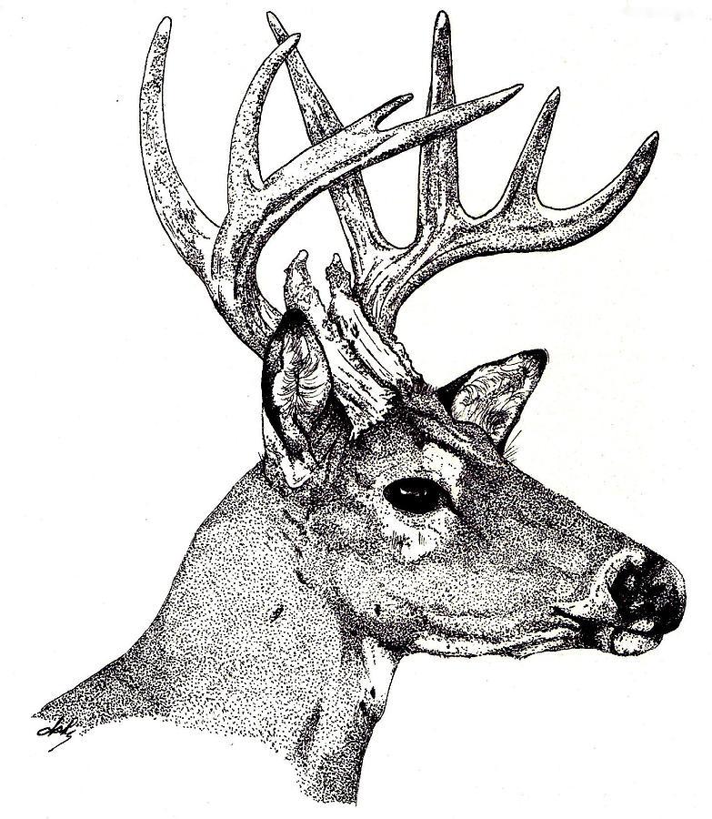 Deer Drawing - Ten Point Buck by Debra Sandstrom
