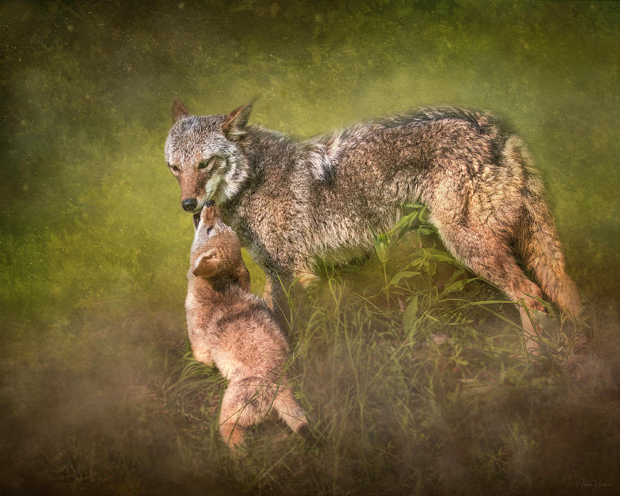 Tender Moment by Nicole Wilde