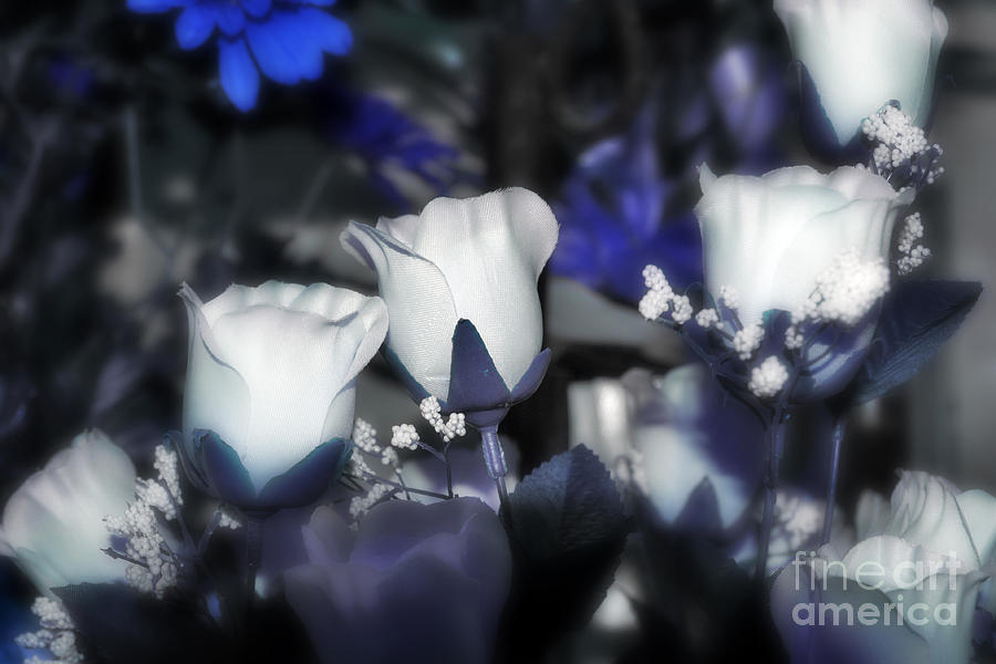 Tulips Photograph - Tender Thoughts Of You by Wendy Mogul