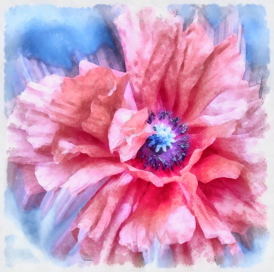 Poppy Photograph - Tenderness by Angelina Vick