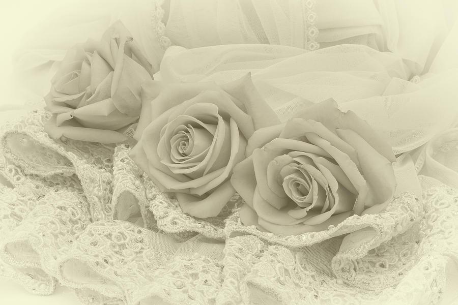 Cream Rose Photograph - Tenderness by Sandra Foster