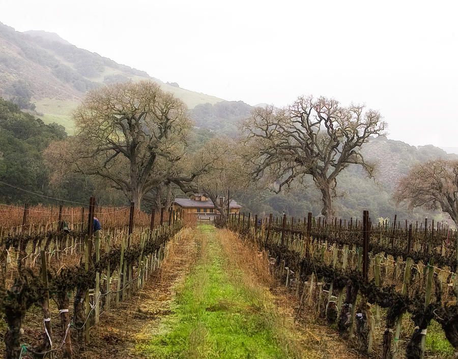 Vineyard Photograph - Tending The Grapes by Lynn Andrews