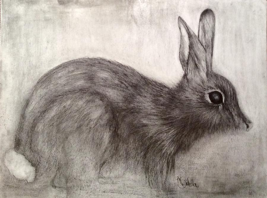 Tennessee Wildlife Cottontail Rabbit by Annamarie Sidella-Felts