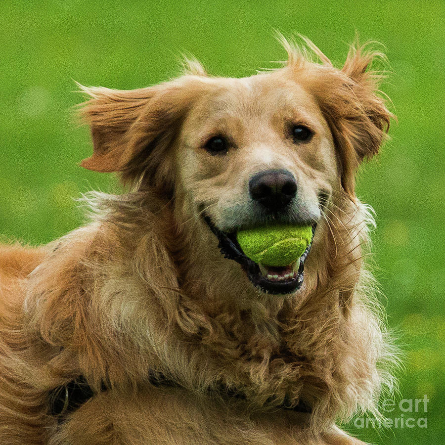 Tennis is on ..wanna play? by Fabrizio Malisan