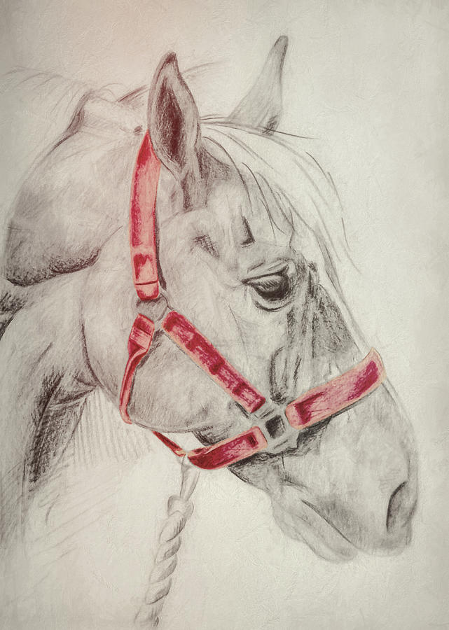 Horse Photograph - Tequila Sketch by JAMART Photography