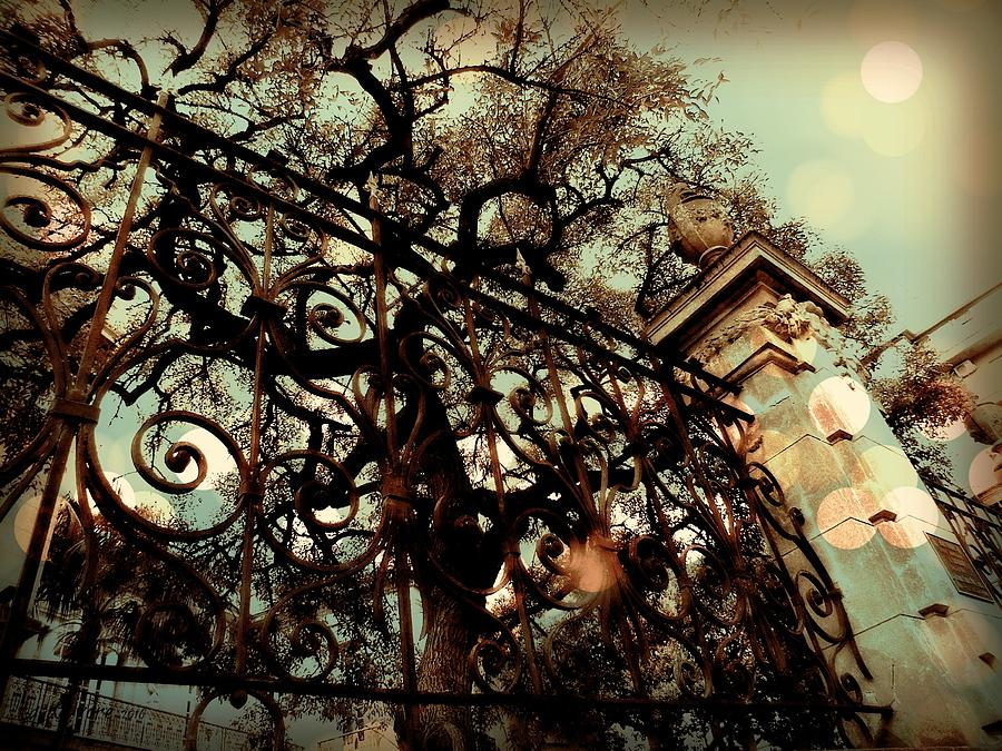 Montevideo Digital Art - Terancos Tree by Tg Devore