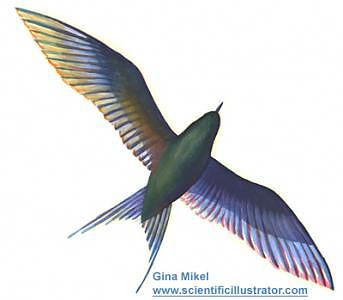 Birds Painting - Tern by Gina Mikel