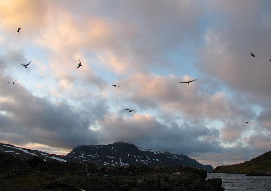 Night Photograph - Terns At Midnight by Sidsel Genee