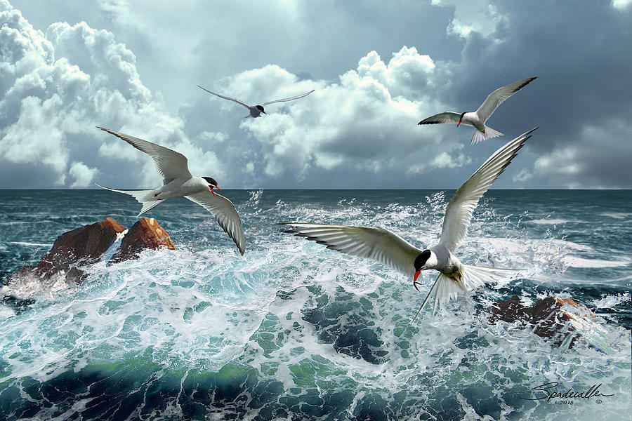 Terns In The Surf by Spadecaller