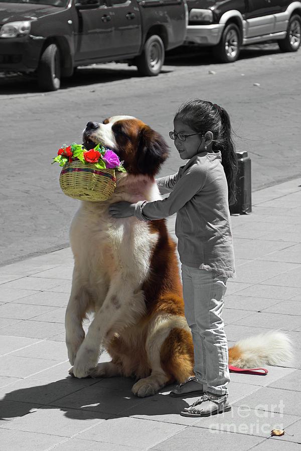Dog Photograph - Cuenca Kids 952 by Al Bourassa