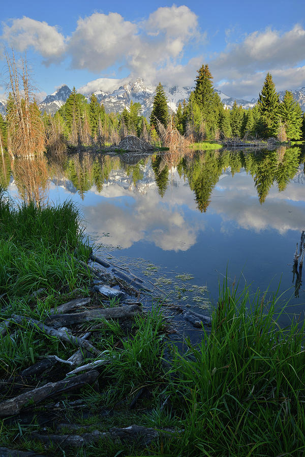Grand Teton National Park Photograph - Teton Reflection In Schwabacher Landing by Ray Mathis