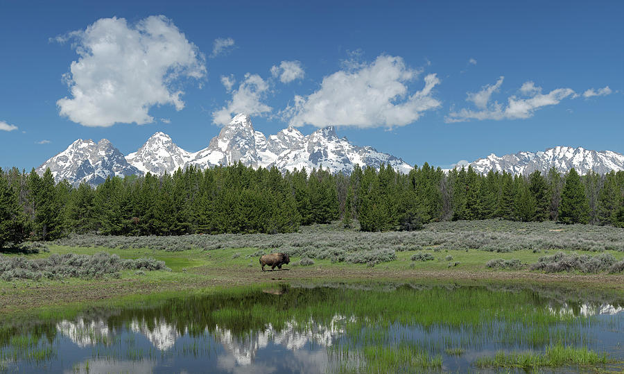 Tetons Photograph - Teton Reflection With Buffalo by George Sanquist