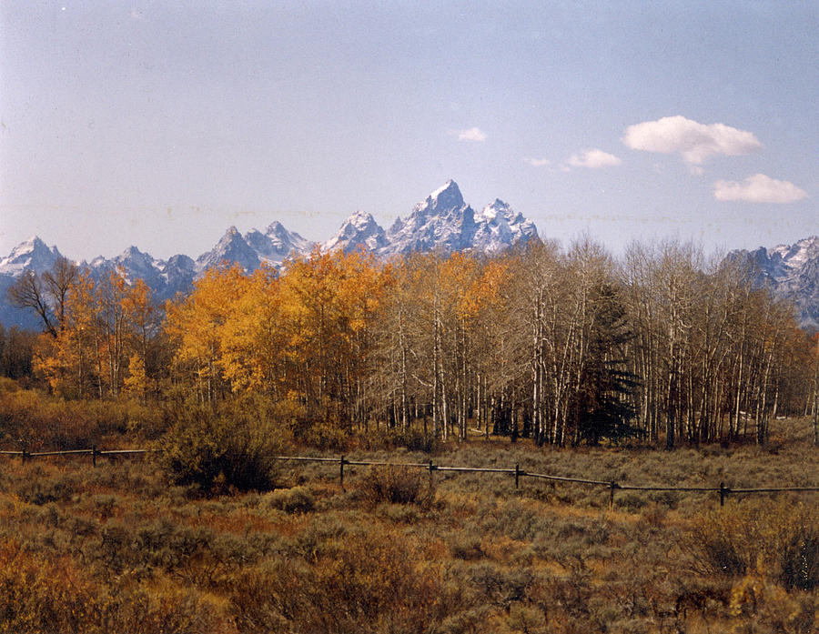 Tetons and Aspens in Autumn by Robert E Alter Reflections of Infinity