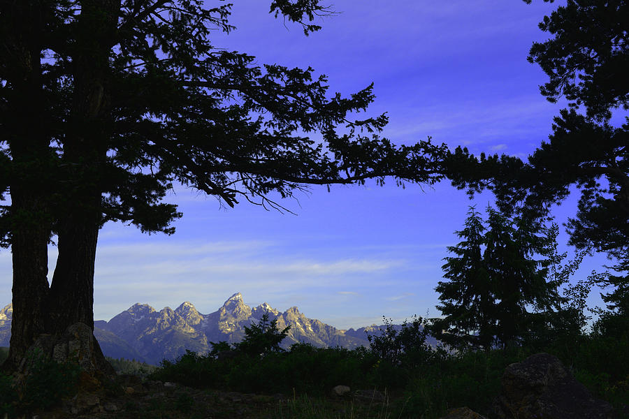Tetons From the Wedding Trees by Craig Ratcliffe