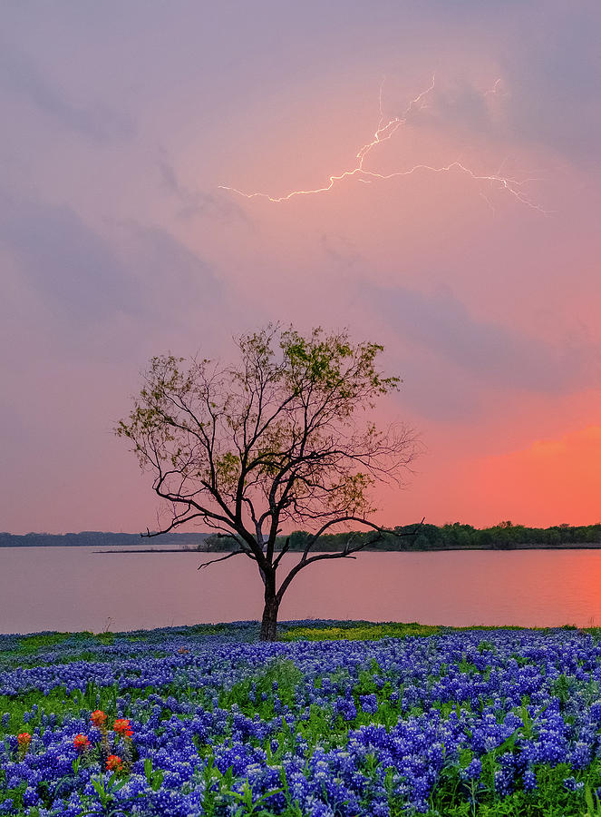 Texas Bluebonnets and Lightning by Robert Bellomy