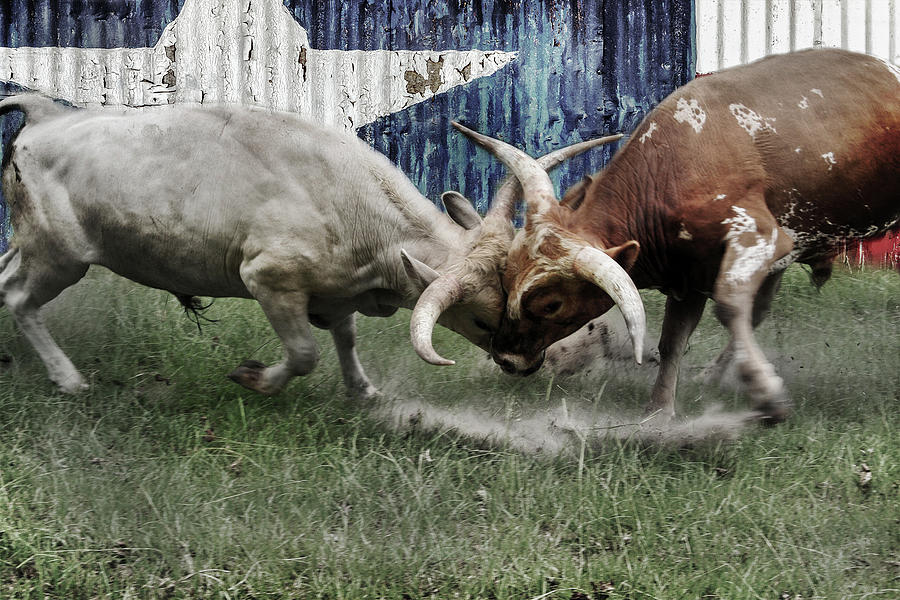 Texas Bull Fight  by Brad Thornton