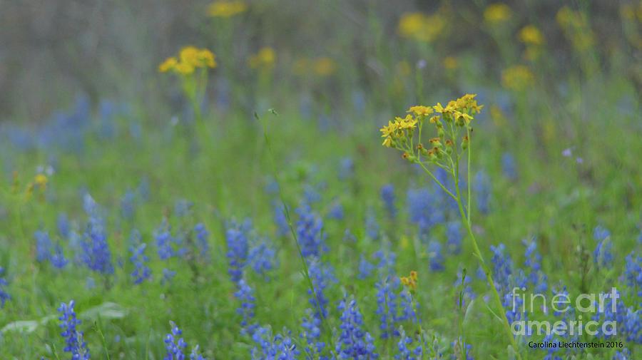 Texas Field With Blue Bonnets Digital Art