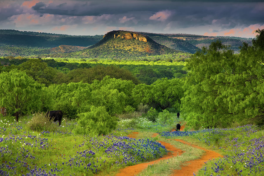 Texas Hill Country Ranch Road by Darryl Dalton