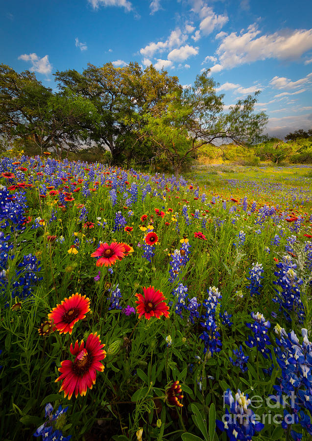 America Photograph - Texas Paradise by Inge Johnsson