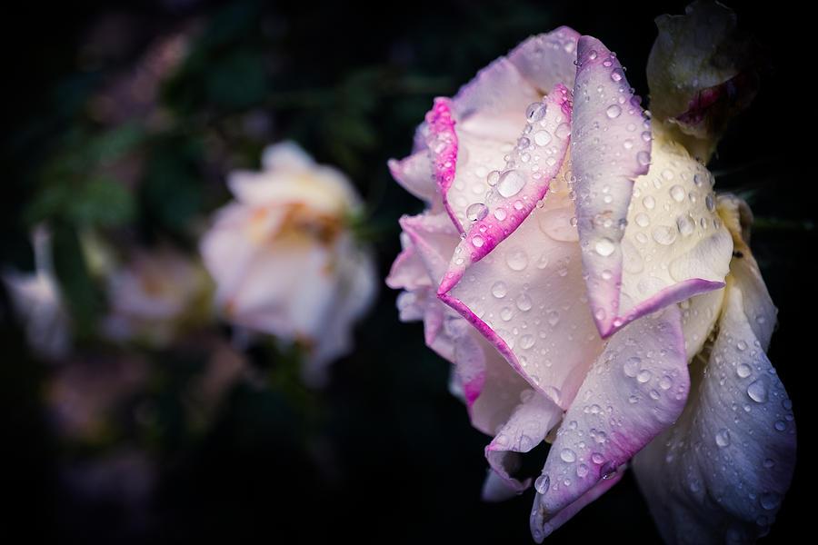 Rain Photograph - Texas Rain Drops by Amber Dopita