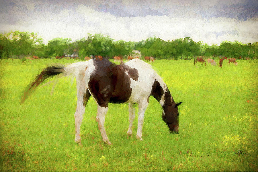 Horse Digital Art - Texas Summer Grazer by Ray Keeling