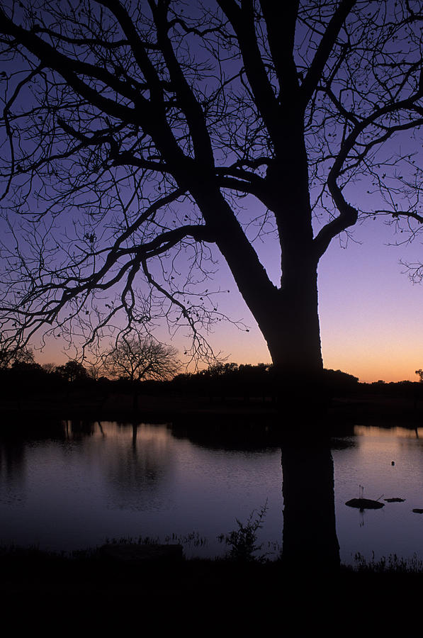 Trees Photograph - Texas Sunset On The Lake by Kathy Yates