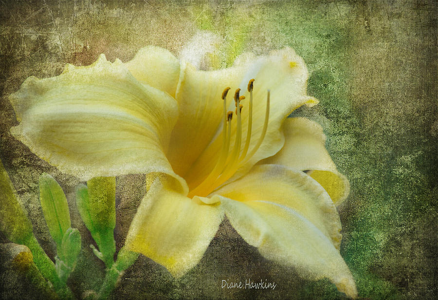 Flowers Photograph - Textured Daylily by Diane Hawkins