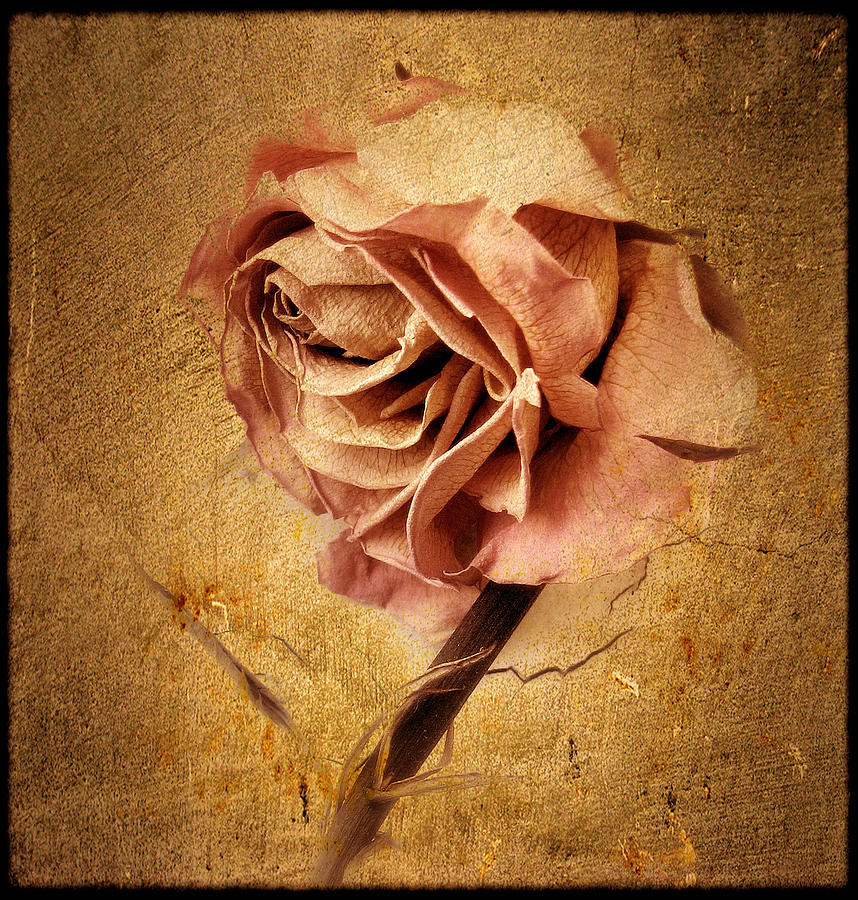 Flower Photograph - Textured Rose by Jessica Jenney