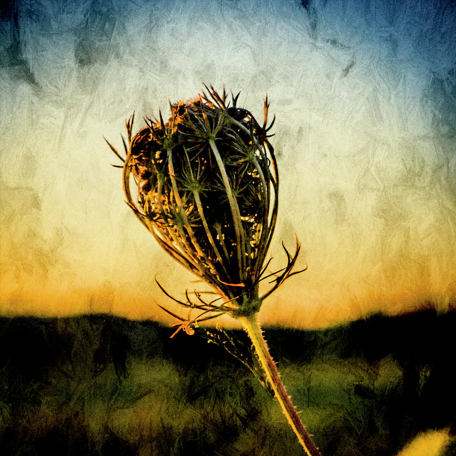 Flower Photograph - Textured Seedhead. by Paul Cullen