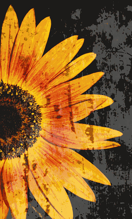 Sunflowers Photograph - Textured Sunflower by Cathie Tyler