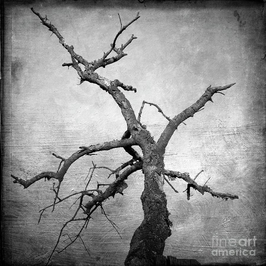 Bare Tree Photograph - Textured Tree by Bernard Jaubert