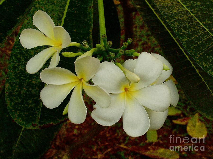 Thai Photograph - Thai Flowers II by Louise Fahy