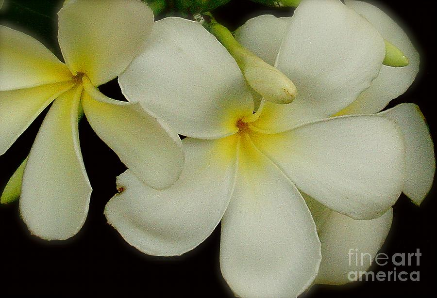 White Photograph - Thai Flowers IIi by Louise Fahy