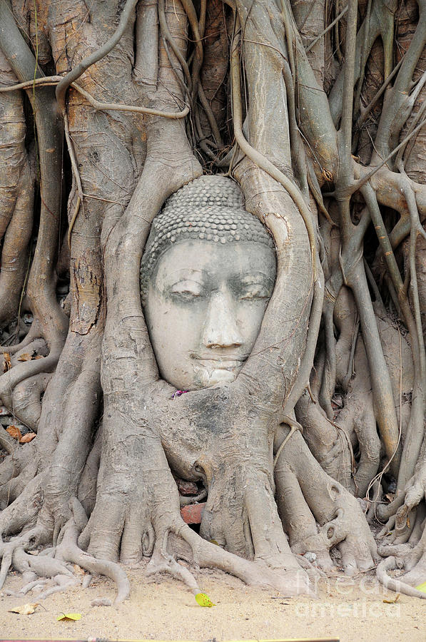 Thailand Photograph - Thailand Sculpture by Adrian Lewandowski